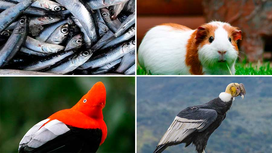 Cuáles son los animales autóctonos del Perú