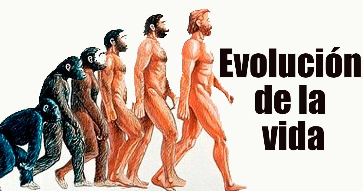 La evolución de la vida